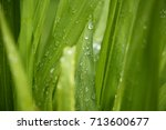 Green Grass Leaves With Morning ...