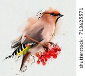 the waxwing  common waxwing  or ... | Shutterstock . vector #713625571