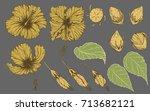 hibiscus flower vector  hand... | Shutterstock .eps vector #713682121