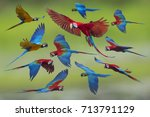macaw flying on green background   Shutterstock . vector #713791129
