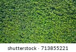 green bush leaf wall texture... | Shutterstock . vector #713855221