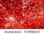 Autumn Colorful Red Maple Leaf...