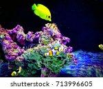 coral reef community saltwater... | Shutterstock . vector #713996605