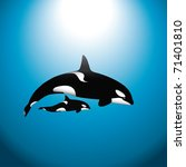 An Orca  Or Killer  Whale With...