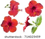 four flowers of hibiscus... | Shutterstock . vector #714025459