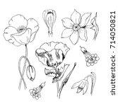 flowers in black ink. poppy... | Shutterstock .eps vector #714050821