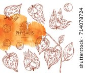 collection of physalis  plant... | Shutterstock .eps vector #714078724