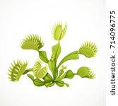 dionaea muscipula realistic... | Shutterstock .eps vector #714096775