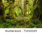 Hoh Rain Forest In Olympic...