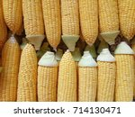 Small photo of top view abreast sweet corns background.