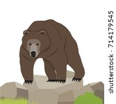 bear  a realistic bear on the...   Shutterstock .eps vector #714179545