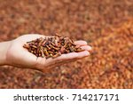 crop of fresh clove spice... | Shutterstock . vector #714217171
