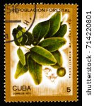 Small photo of MOSCOW, RUSSIA - AUGUST 29, 2017: A stamp printed in shows Calophyllum brasiliense, Afforestation serie, circa 1975
