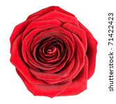 Stock photo perfect red rose flowerhead isolated on white background top view on big red rose flower 71422423