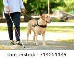 guide dog helping blind woman... | Shutterstock . vector #714251149