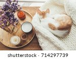 Stock photo ginger kitten sleeping on knitted woolen sweater wooden tray with home decor near the window fall 714297739