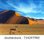 african antelope impala... | Shutterstock . vector #714297985