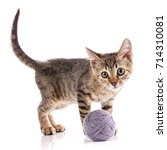 Stock photo a kitten on a white background the cat is playing with the ball nba player 714310081