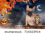 Stock photo small domestic kitten and french bulldog puppy sitting on a brick wall with pumpkin on halloween 714323914