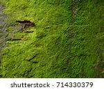 Moss Texture. Moss Background....