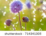 a ladybug on the flower. | Shutterstock . vector #714341305