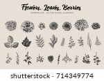 Stock vector flowers leaves berries set botanical vector vintage illustration summer design elements black 714349774
