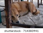 poor strayed dog on the beach | Shutterstock . vector #714383941