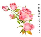 Stock photo isolated composition of watercolor pink roses 714389911