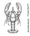 ink sketch of lobster. isolated ...   Shutterstock .eps vector #714415477