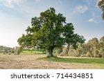 large oak tree | Shutterstock . vector #714434851