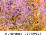 flowers in steppe. background... | Shutterstock . vector #714459829