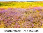 flowers in steppe. background... | Shutterstock . vector #714459835