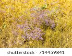 flowers in steppe. background... | Shutterstock . vector #714459841