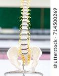 the vertebral column  also... | Shutterstock . vector #714500269