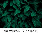 Green leaves pattern background ...