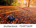 autumn colorful red maple leaf... | Shutterstock . vector #714571639