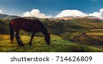 brown horse grazing in mountain ... | Shutterstock . vector #714626809