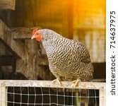 local farm view with chicken.... | Shutterstock . vector #714637975