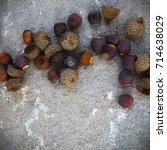 oak acorns on the ground. | Shutterstock . vector #714638029