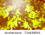 abstract autumn leaves.... | Shutterstock . vector #714638041
