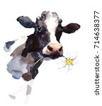 Stock photo watercolor cow with a daisy flower in its mouth farm animal portrait hand painted illustration 714638377
