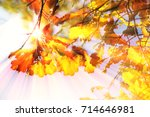 autumn leaves  very shallow... | Shutterstock . vector #714646981