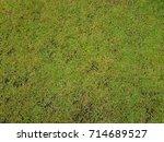green and yellow grass texture... | Shutterstock . vector #714689527