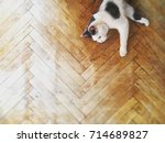 black and white cat on wood... | Shutterstock . vector #714689827