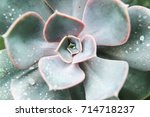 Close Up Of Green Succulent...