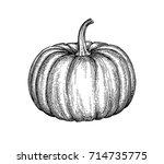ink sketch of pumpkin isolated...   Shutterstock .eps vector #714735775