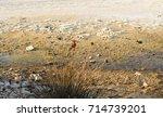 swamp in mykonos greece   Shutterstock . vector #714739201