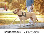 guide dog helping blind woman... | Shutterstock . vector #714740041