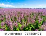 lavender fields | Shutterstock . vector #714868471