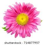 daisy chrysanthemum chamomile...   Shutterstock . vector #714877957